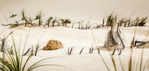 Piece of rock on sand dunes, Te Paki Reserves, Cape Reinga, New