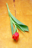 red tulips isolated on wood