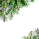 Christmas tree isolate on white background
