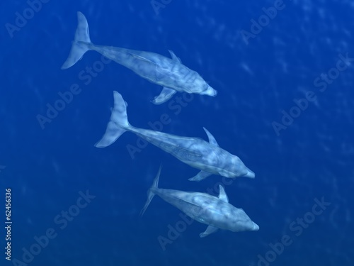 HI res Dolphins under water