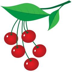 Branch of ripe berries