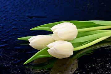 fototapeta trzy białe tulipany