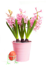 Blossoms of hyacinth with egg against white background