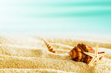 Tropical beach with seashells on a hot summer day