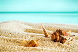 Beautiful tropical beach with seashells