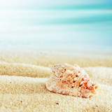 Conch shell on a tropical beach