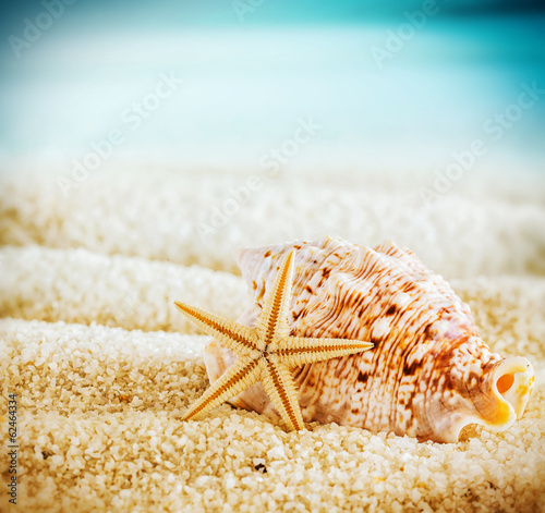 Seashell and starfish on a tropical beach