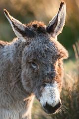 cute donkey portrait