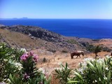 horse standing on a field of flowers with the sea view
