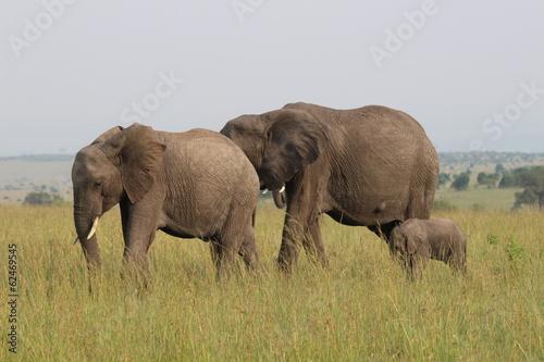 サファリを歩くアフリカゾウ