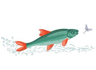Fish and ephemera