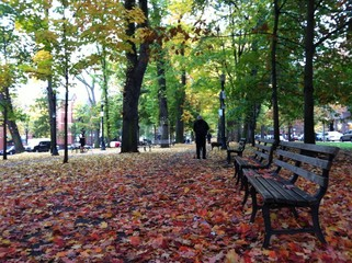 Benches in a park Fall season