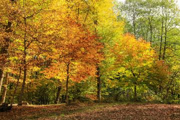 Смешанный лес осенью на Северном Кавказе