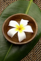 frangipani flower in bowl on leaf bamboo mat