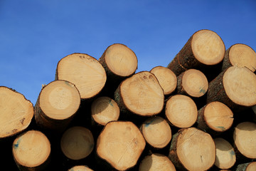 Timber Logs and Blue Sky