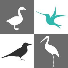 Bird. Set
