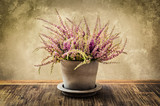 Detail of nice heather flower in pot, vintage style