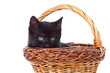 kitten inside of basket