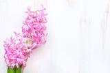 pink hyacinth on a white wooden background and space for text