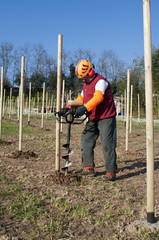 Preparing plantation