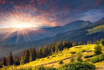 Colorful summer morning in the mountains.