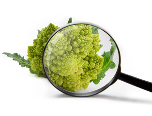 Closeup of Romanesco spiral broccoli with magnifying glass