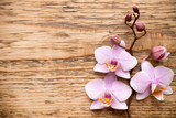 Fototapety Orchid.