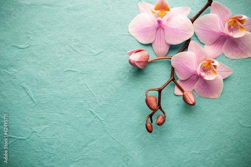 Fototapety, obrazy : Orchid.