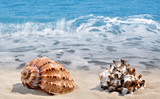 Conch shells on beach