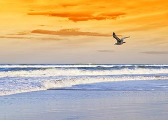 la playa de la gaviota