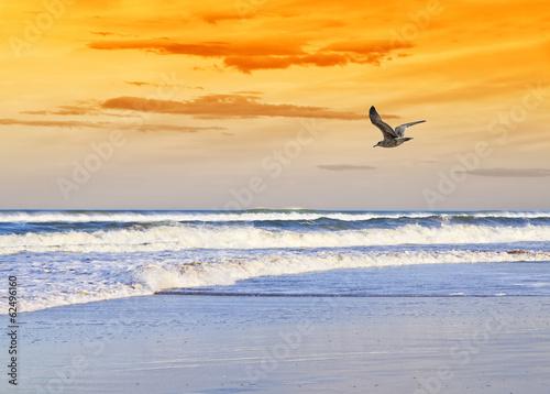la playa de la gaviota Billede på lærred