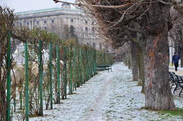 Volksgarten Wien im Winter