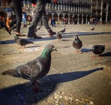 Tourists surrounded by the pigeons, San Marco - Venice