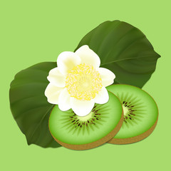 Kiwi fruit and flower