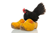 chicken on Dutch wooden clogs
