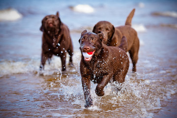 dogs playing at the sea