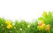 canvas print picture - Ostern - Freisteller - Wiese - Blumen - Gras