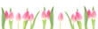 canvas print picture - Banner - Pink Tulips