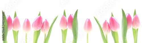canvas print picture Banner - Pink Tulips