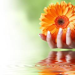 Schöne Hand mit Blume