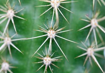 A nice specimen of cactus
