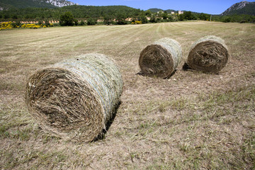 Hay harvest in italy