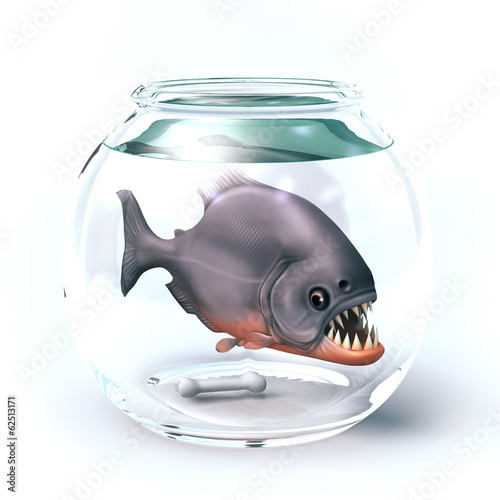 piranha in glass aquarium