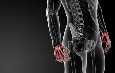 3d render skeletal hand - side view