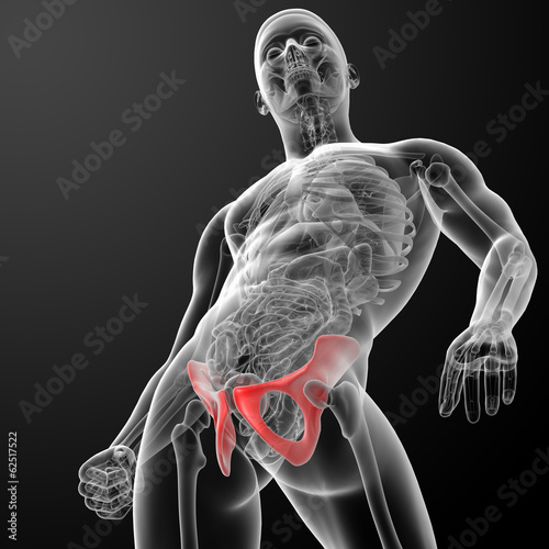 3d render pelvis under the X-rays - bottom view