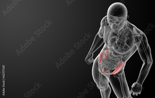 3d render pelvis under the X-rays - top view