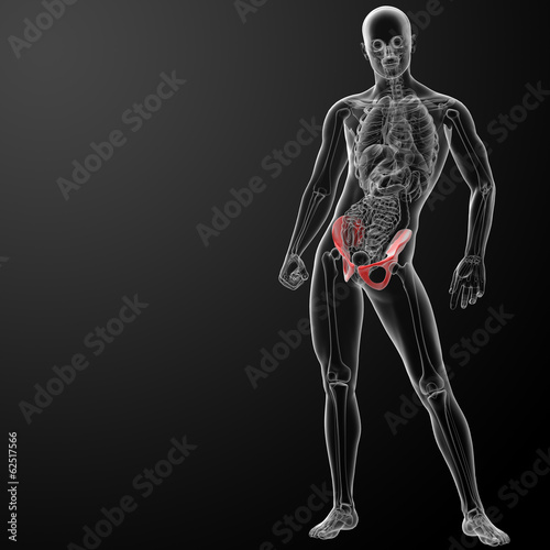 3d render pelvis under the X-rays - front view