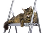 cat feeling proud being on top of a ladder