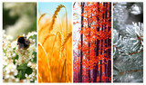 Four seasons: Spring, summer, autumn and winter - 62518925
