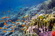 Coral landscape, Red Sea, Egypt